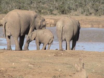 south-africa-safari-2-sized-as-within-our-travels