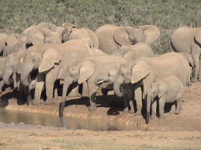 south-africa-safari-3-sized-as-within-our-travels