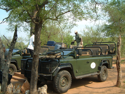 south-africa-safari-sized-as-within-our-travels