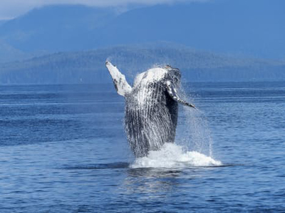 humpback-whale-natural-spectacle-nature-mammal-51964-sized