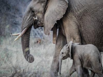 pexels-photo-elephants-sized