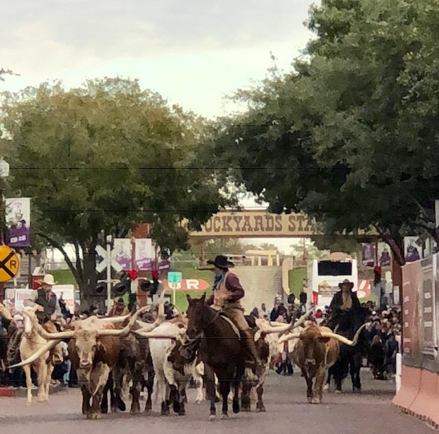 longhorn cattle, travel wallet