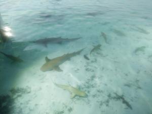 trip to maldives from travel wallet bridgnorth