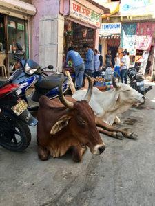 india-street-life